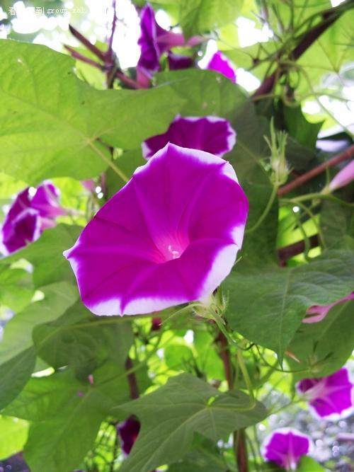 紫色色调的美女手机壁纸