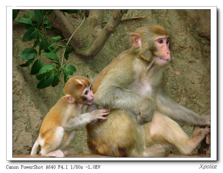 可爱的精灵(抓拍猴子13p)  8 # 大 中 小发表于 2007-09-19 20:17:20