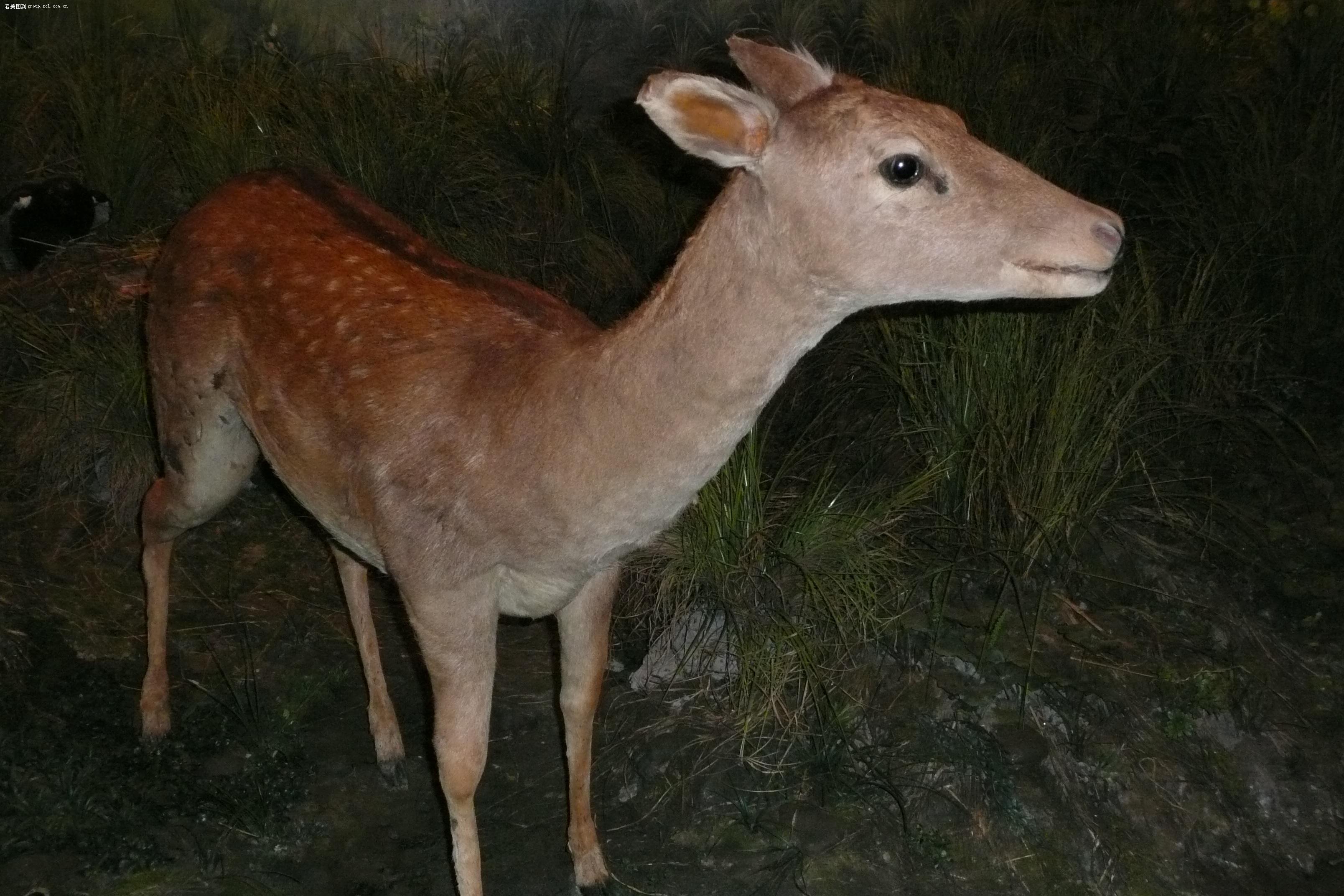 国际动物保护级别
