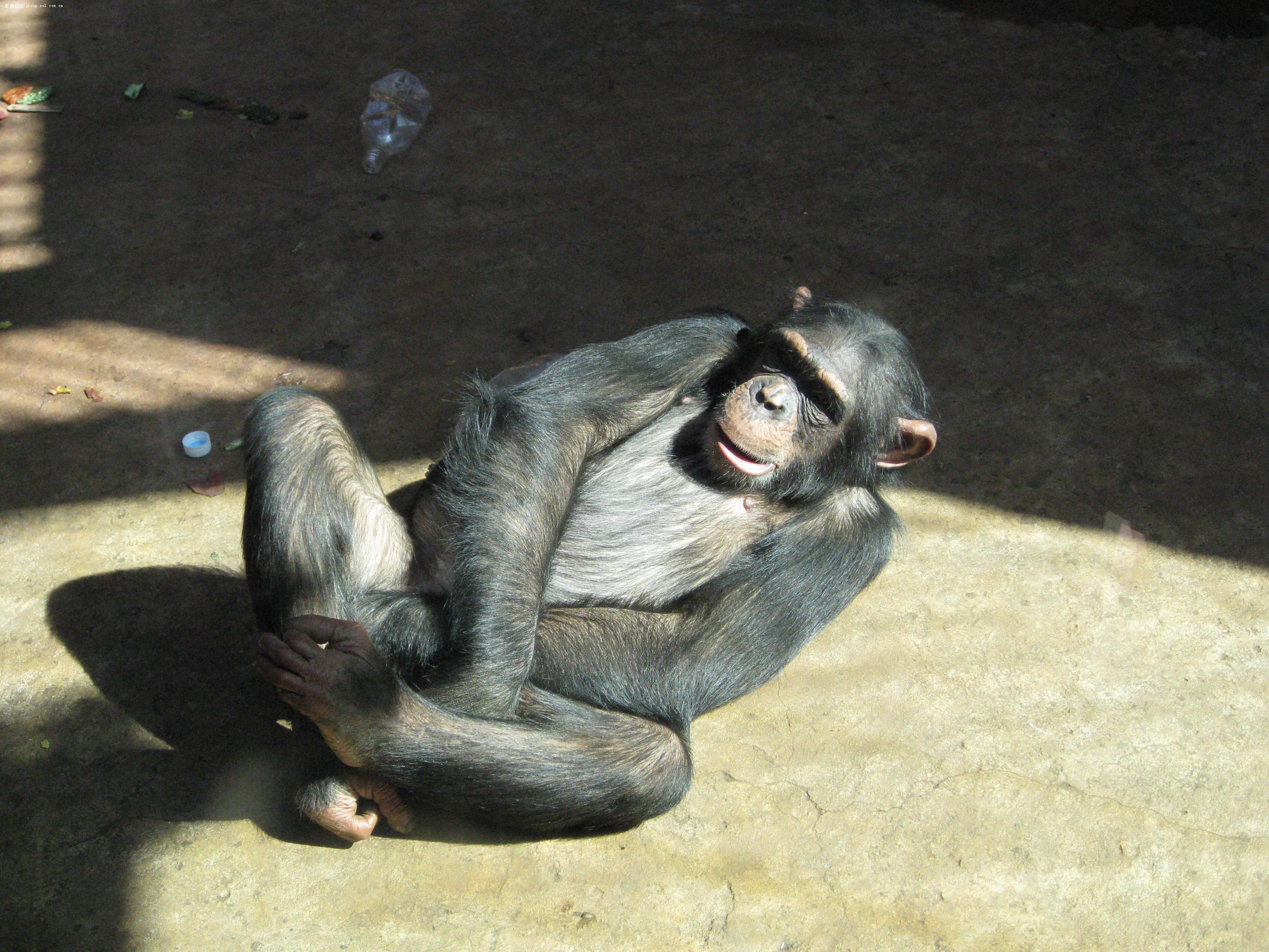 【沈阳棋盘山森林野生动物园游览图片之笼养篇】佳能
