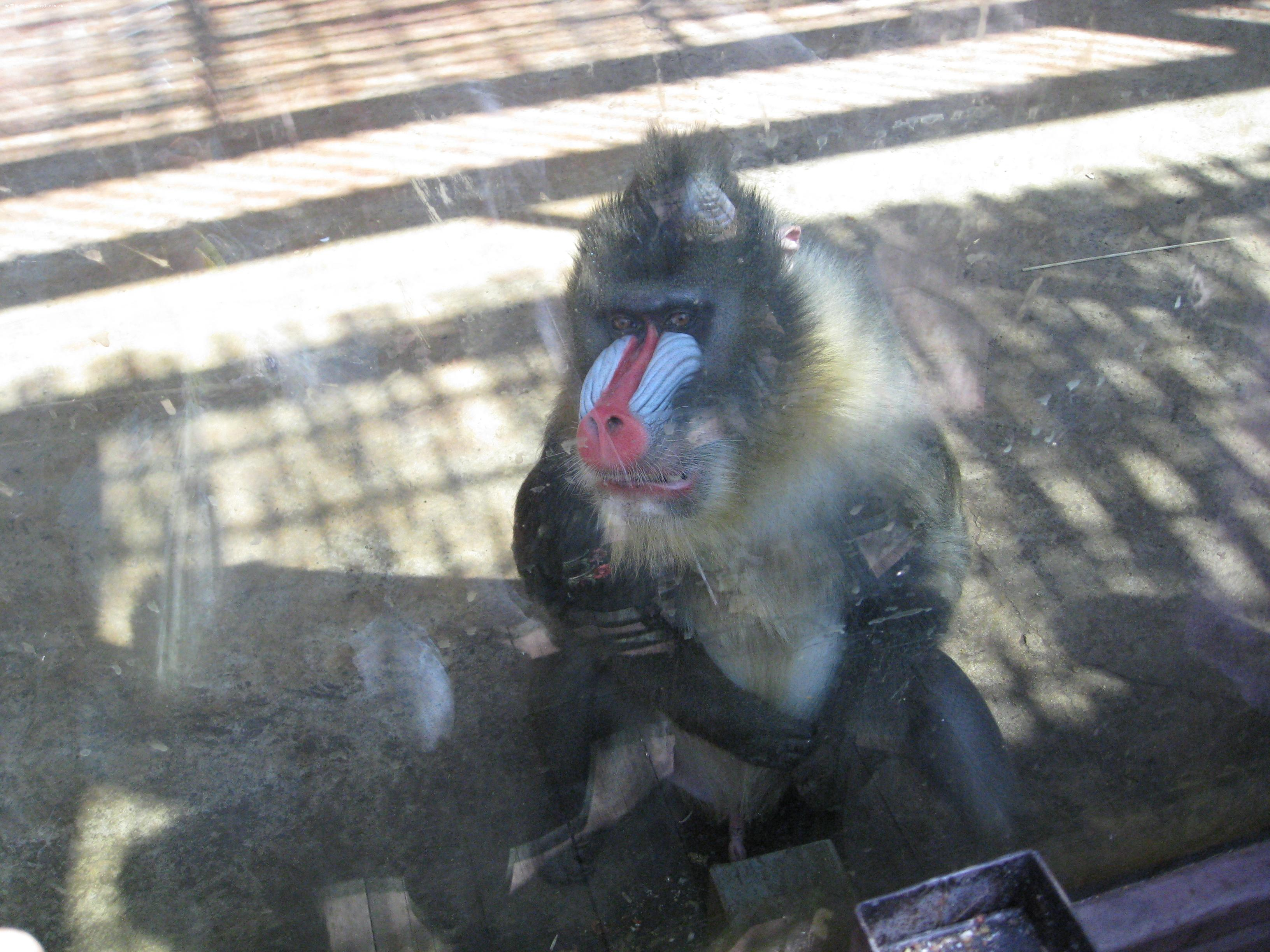 沈阳棋盘山森林野生动物园游览图片之笼养篇