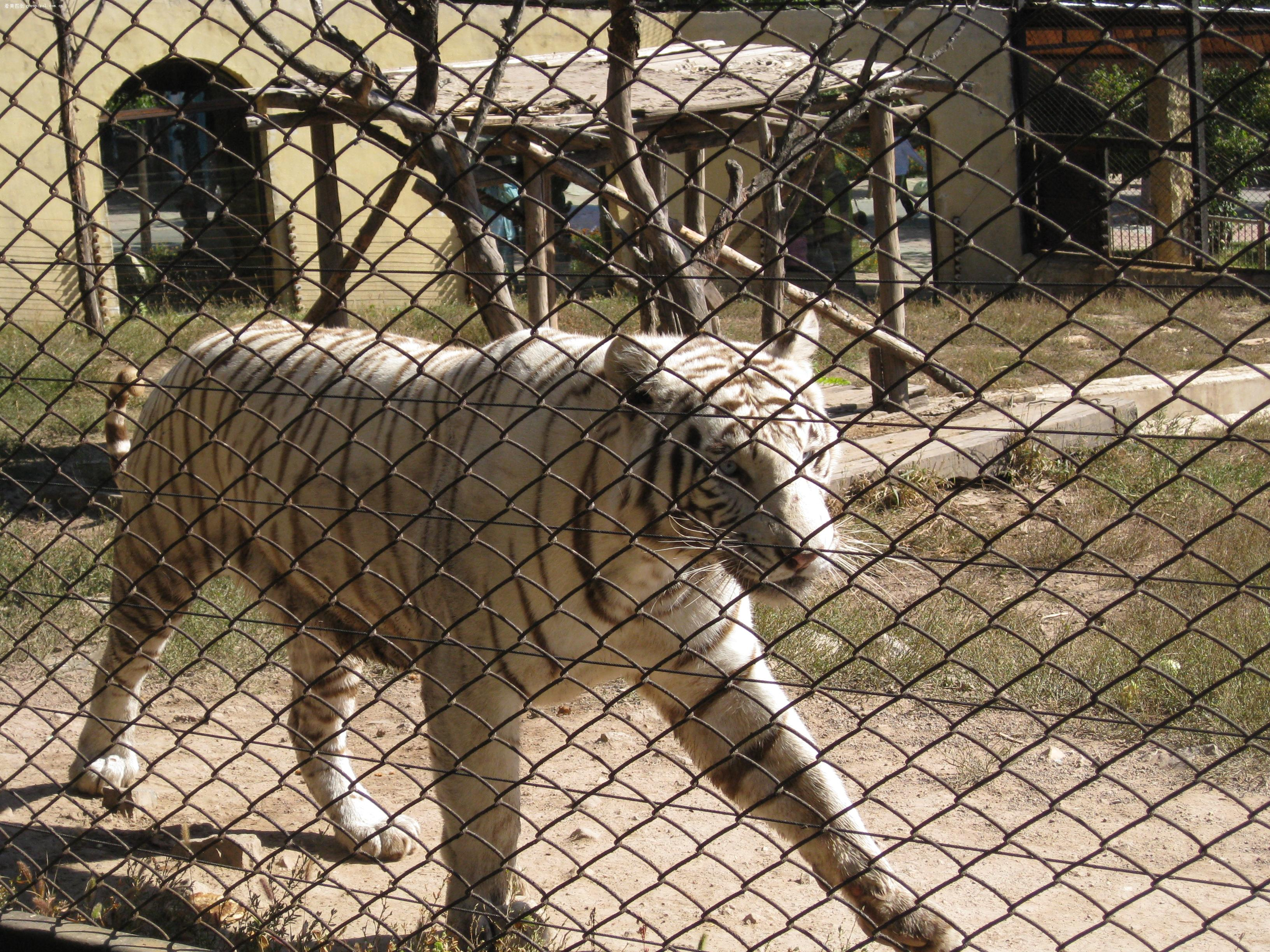 【沈阳棋盘山森林野生动物园游览图片之笼养篇】-第2