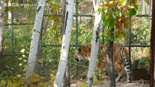 【哈尔滨北方森林动物园