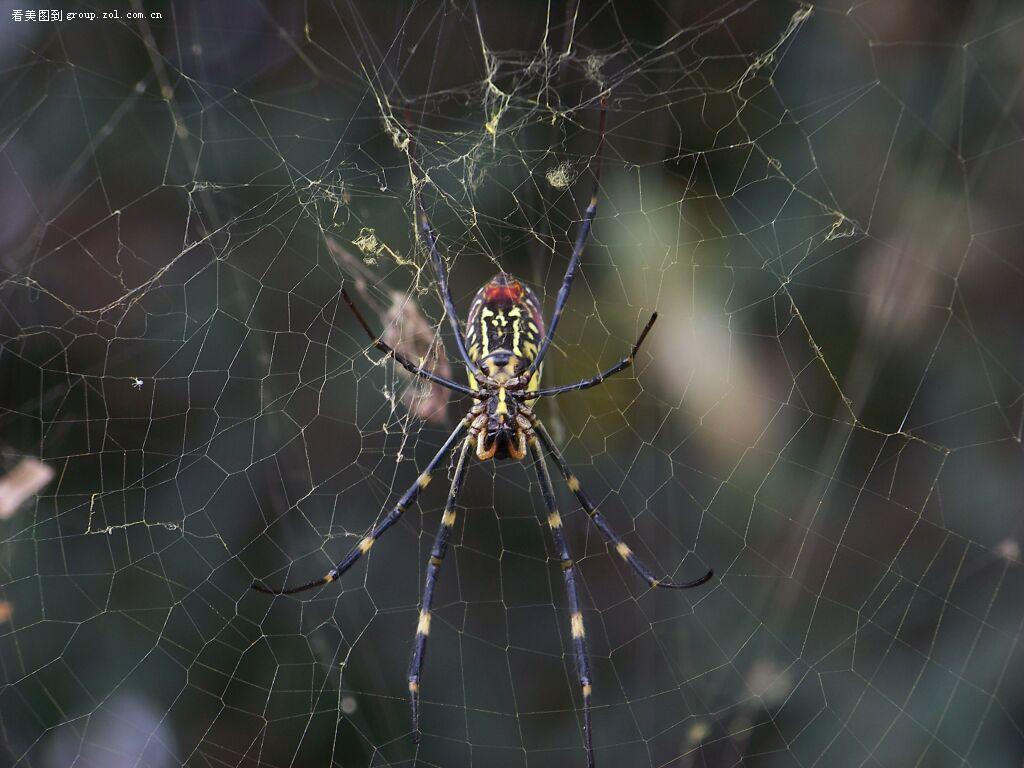 【野花野草&红蜘蛛】-动物植物论坛-zol中关村在线
