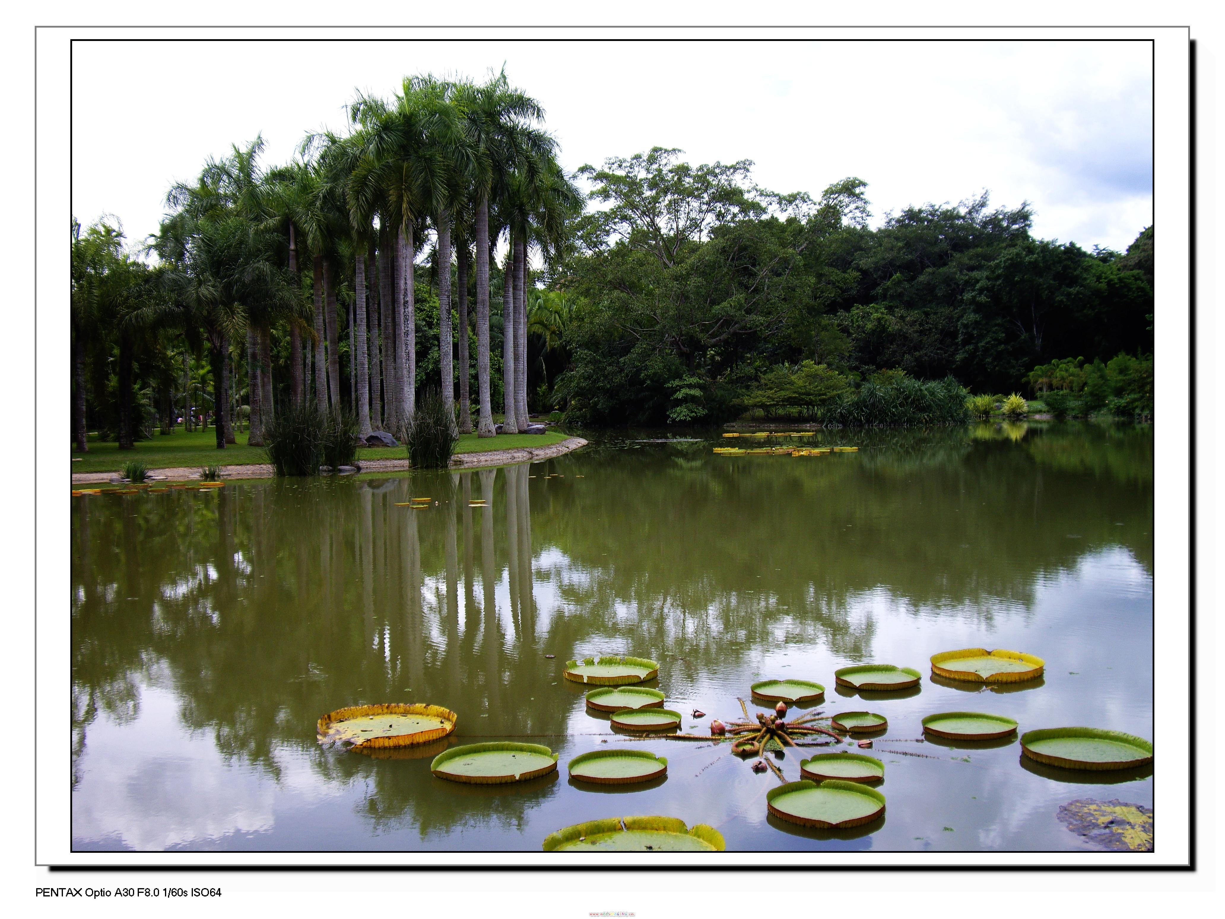 版纳热带植物园一景