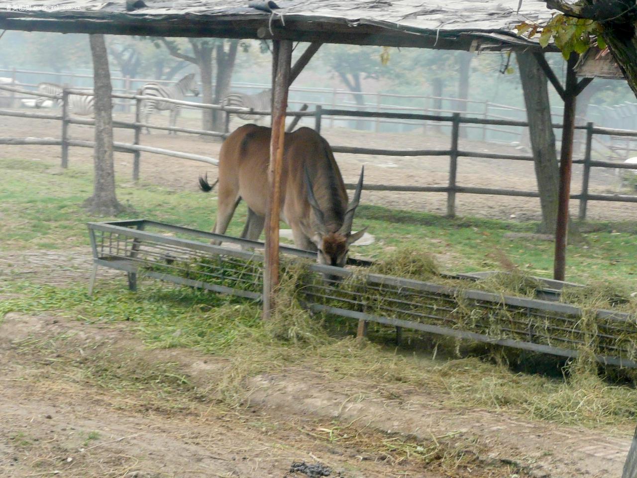 西安野生动物园之三--坐封闭大巴--进入猛曽区