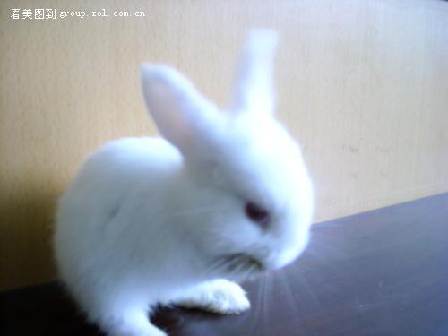 小白兔可爱-中关村在线摄影论坛
