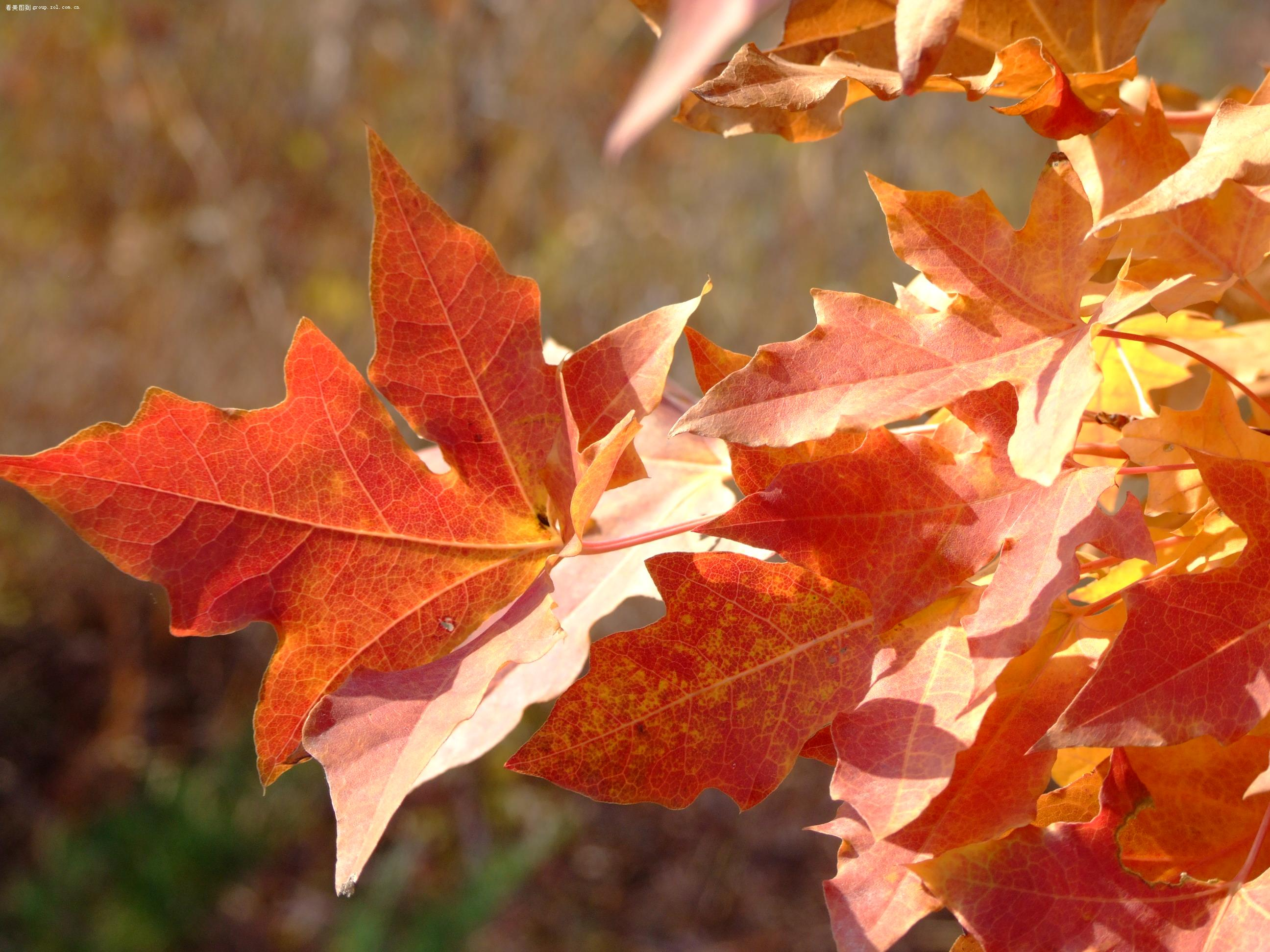 秋天树叶子作品