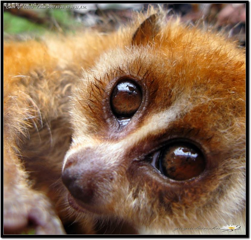 【大眼睛*蜂猴】-佳能g7论坛-zol中关村在线