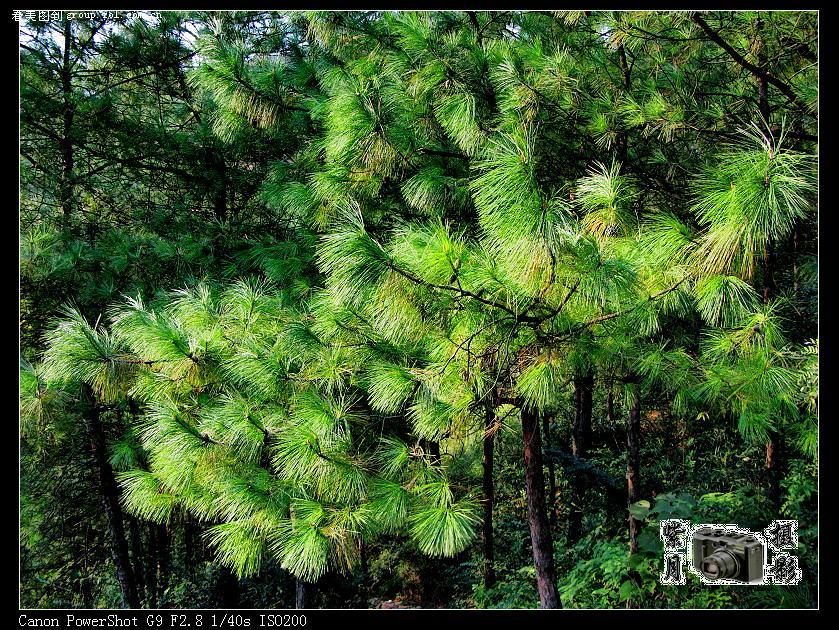 [紫月灵风]森林公园之汤溪九峰山篇