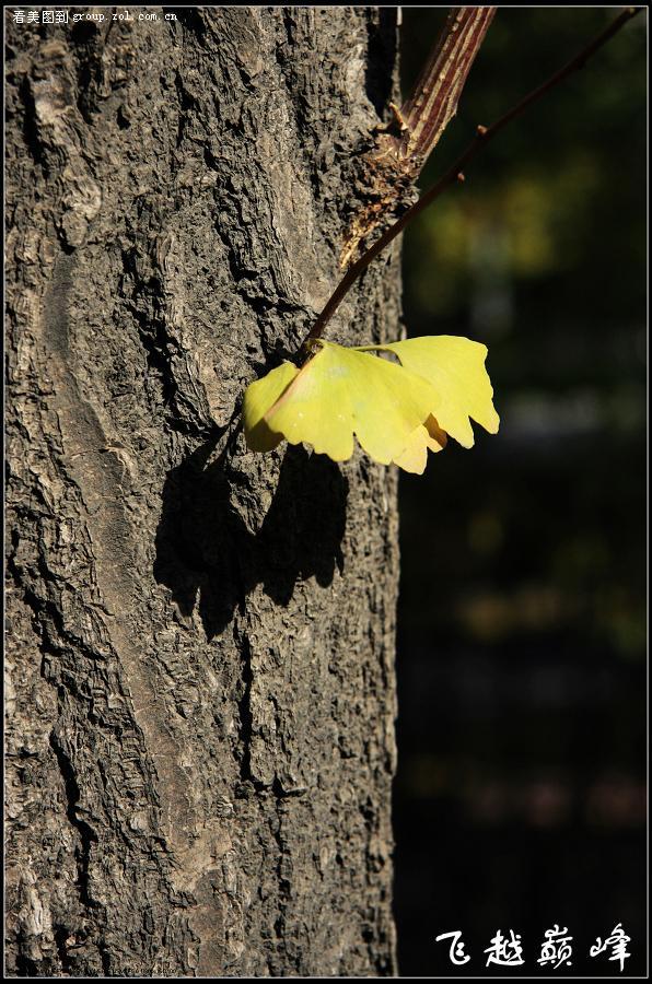 树叶子手工动物
