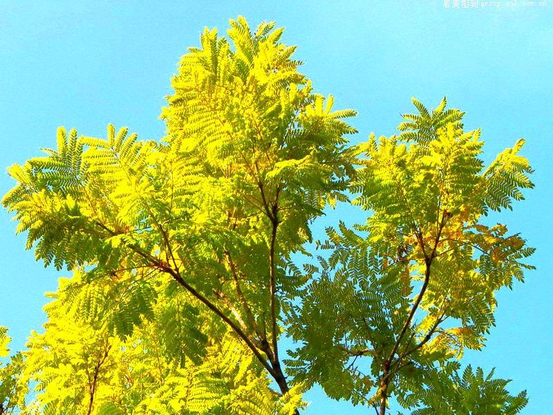 阳光下的这些花儿树儿.