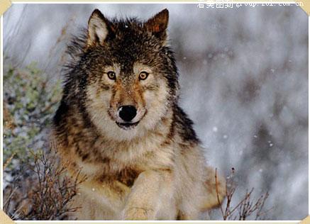 野生动物摄影作品欣赏-中关村在线摄影论坛