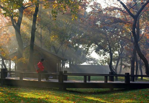 阳光洒满清晨的树林