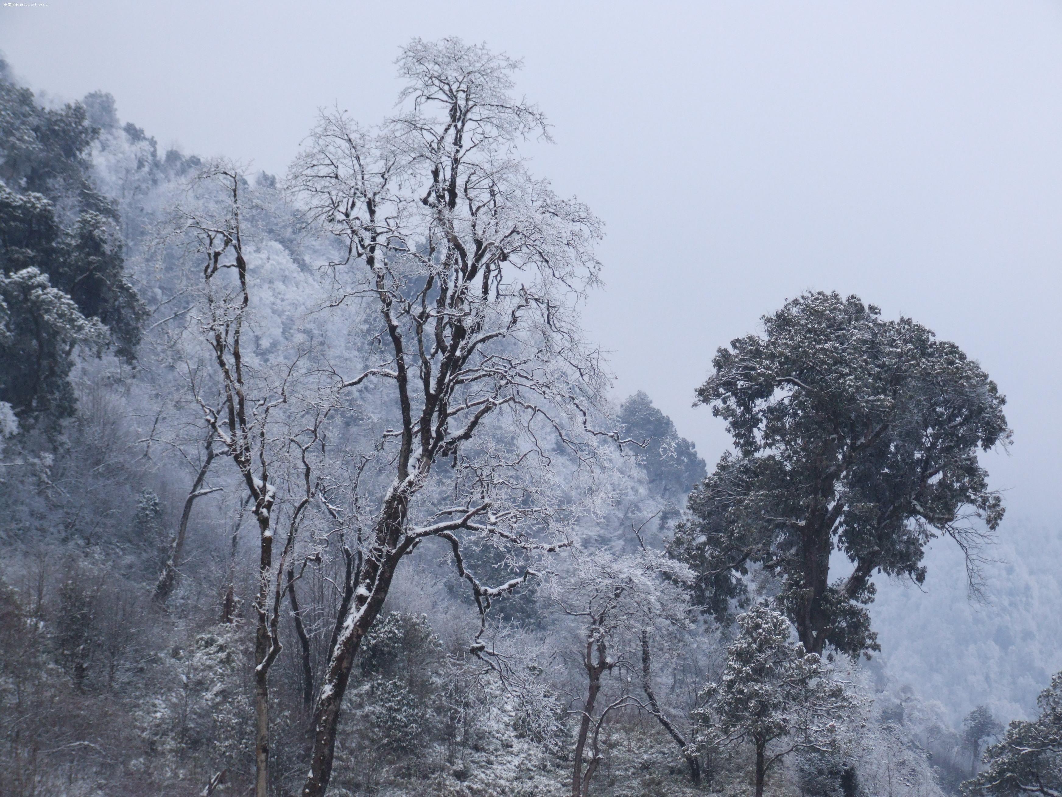 【二郎山雪景】富士 s9600(s9100)-数码摄影论坛-zol