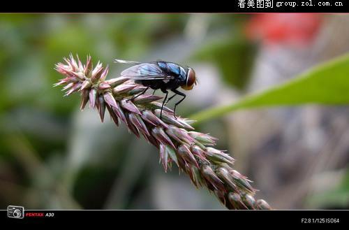 万花木甲鸟有什么用