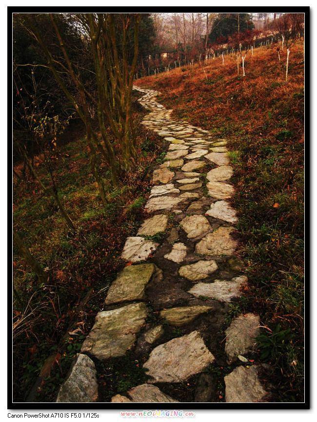 《弯弯的小路》图片