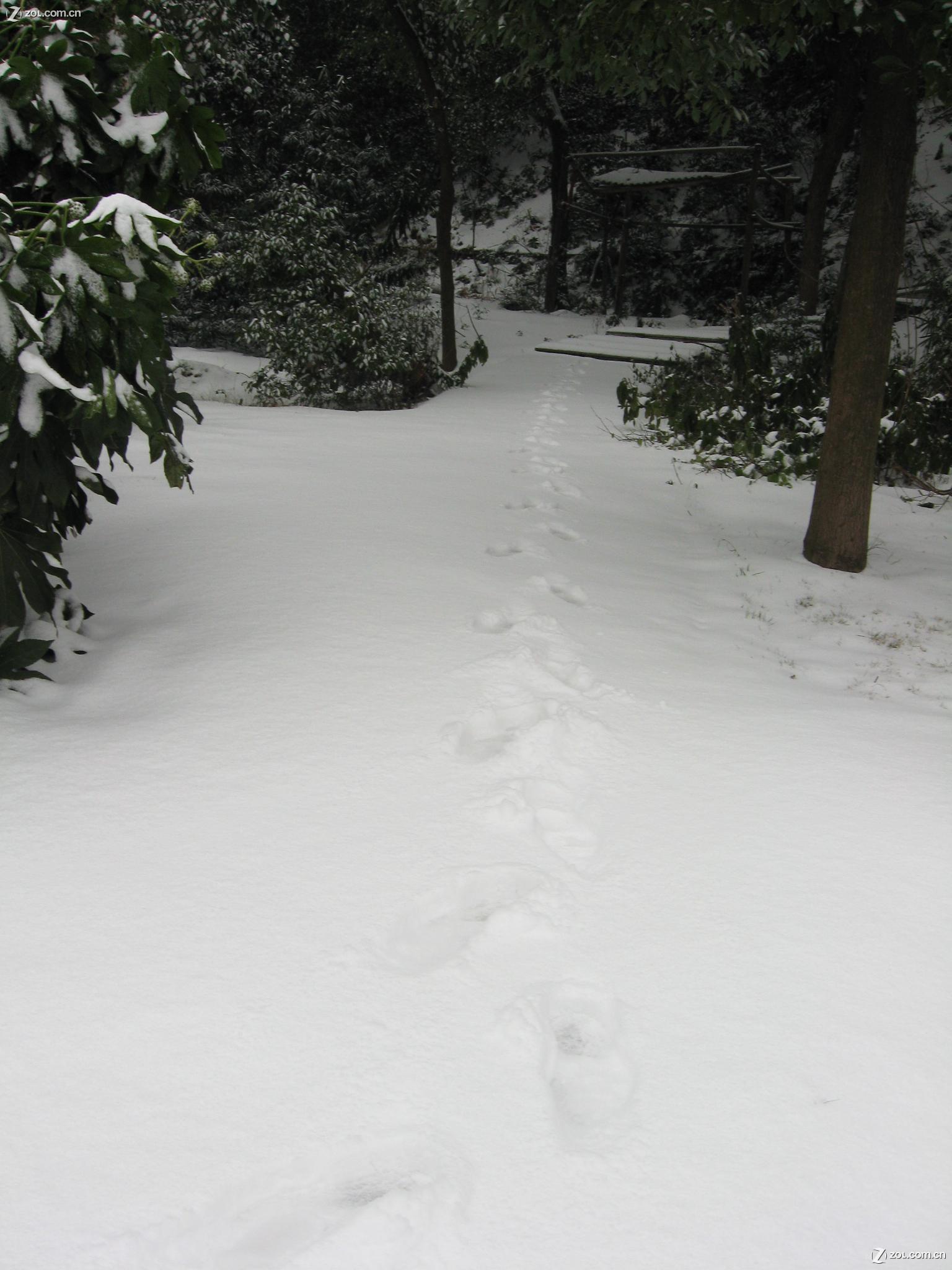 2008的第一场雪_【湖南2008的第一场雪】佳能