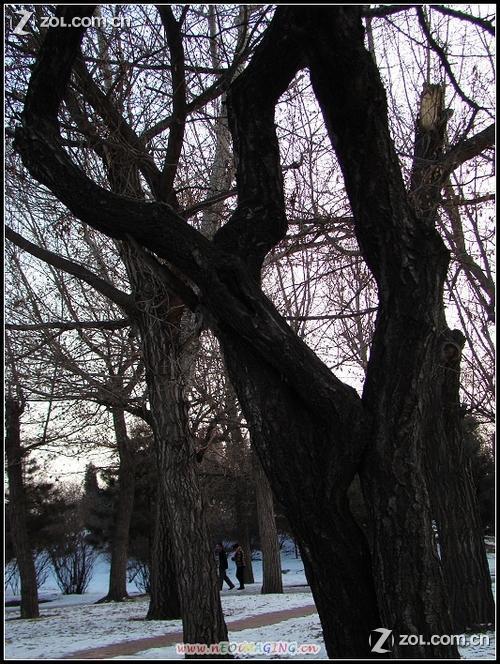 冬天的大树-中关村在线摄影论坛