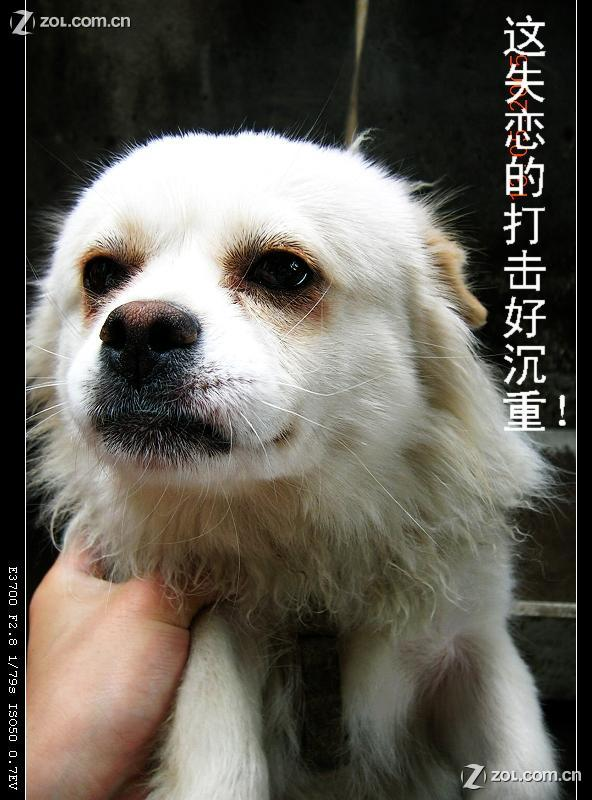 【漂亮的动物,搞笑的表情(原创)】-尼康