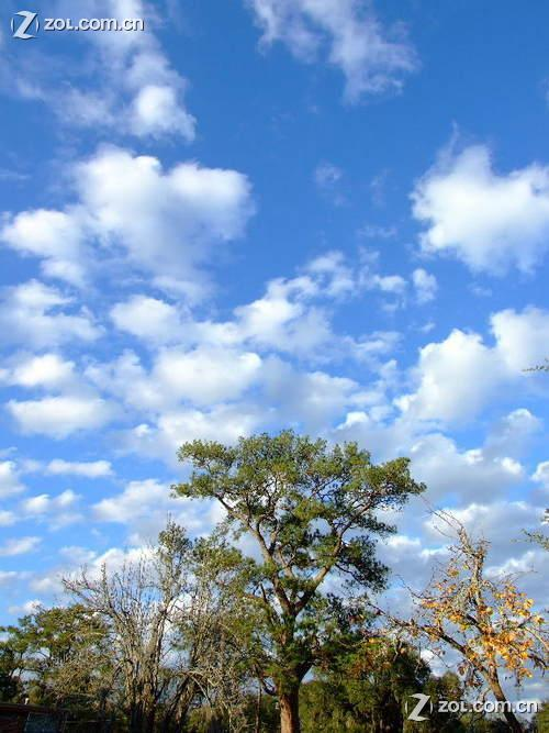 绿树蓝天白云,迪斯尼