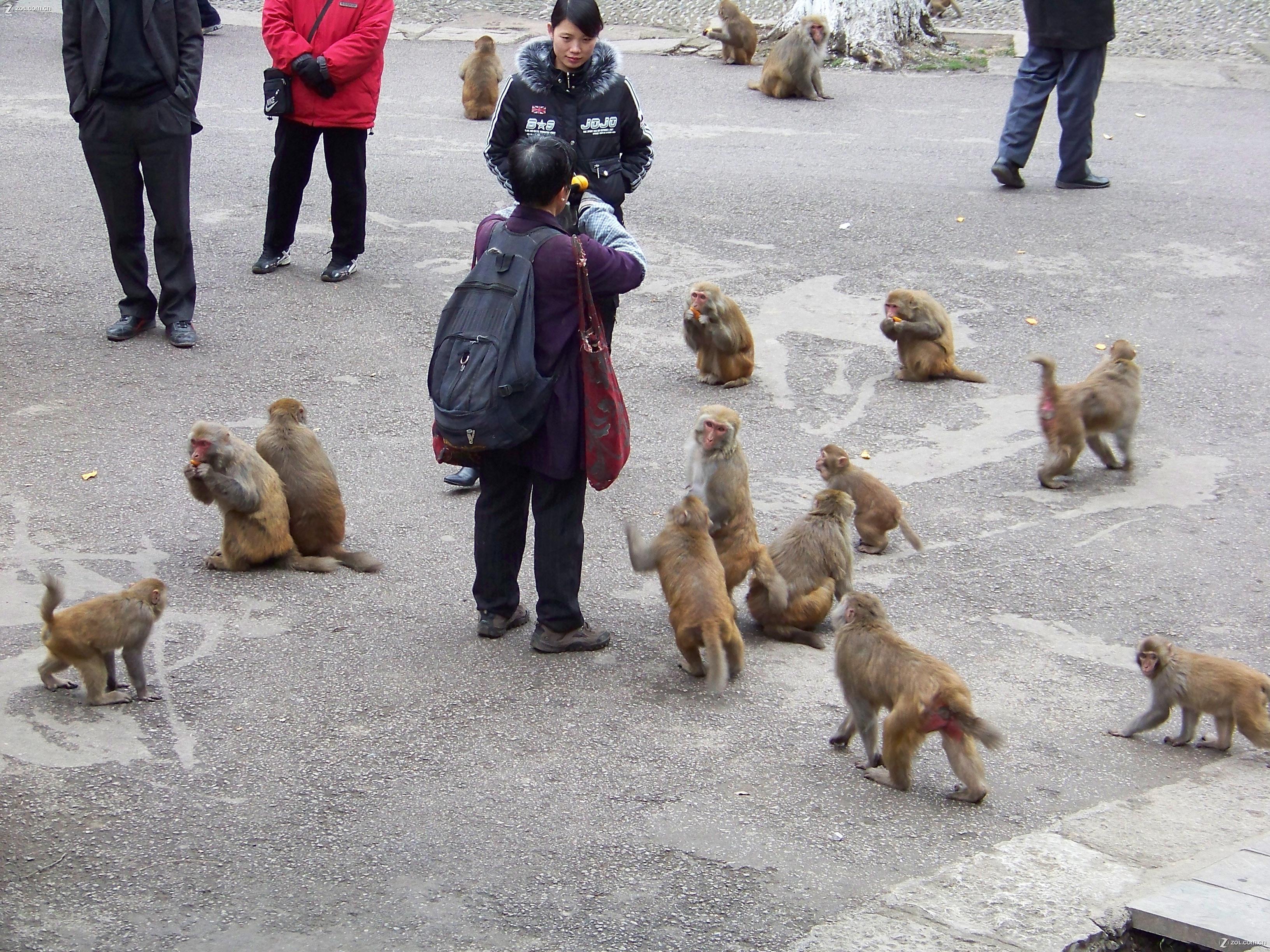 【可爱的猴子(二)】-动物植物论坛-zol中关村在线