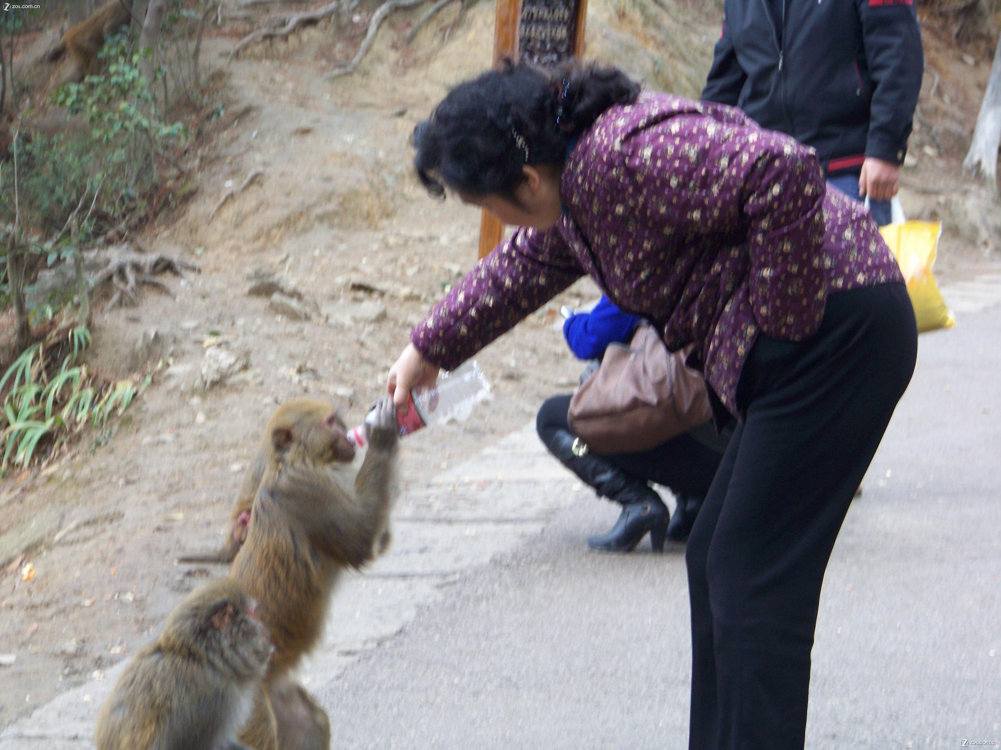 【可爱的猴子(二)】-柯达z1012/z812/z712论坛-zol