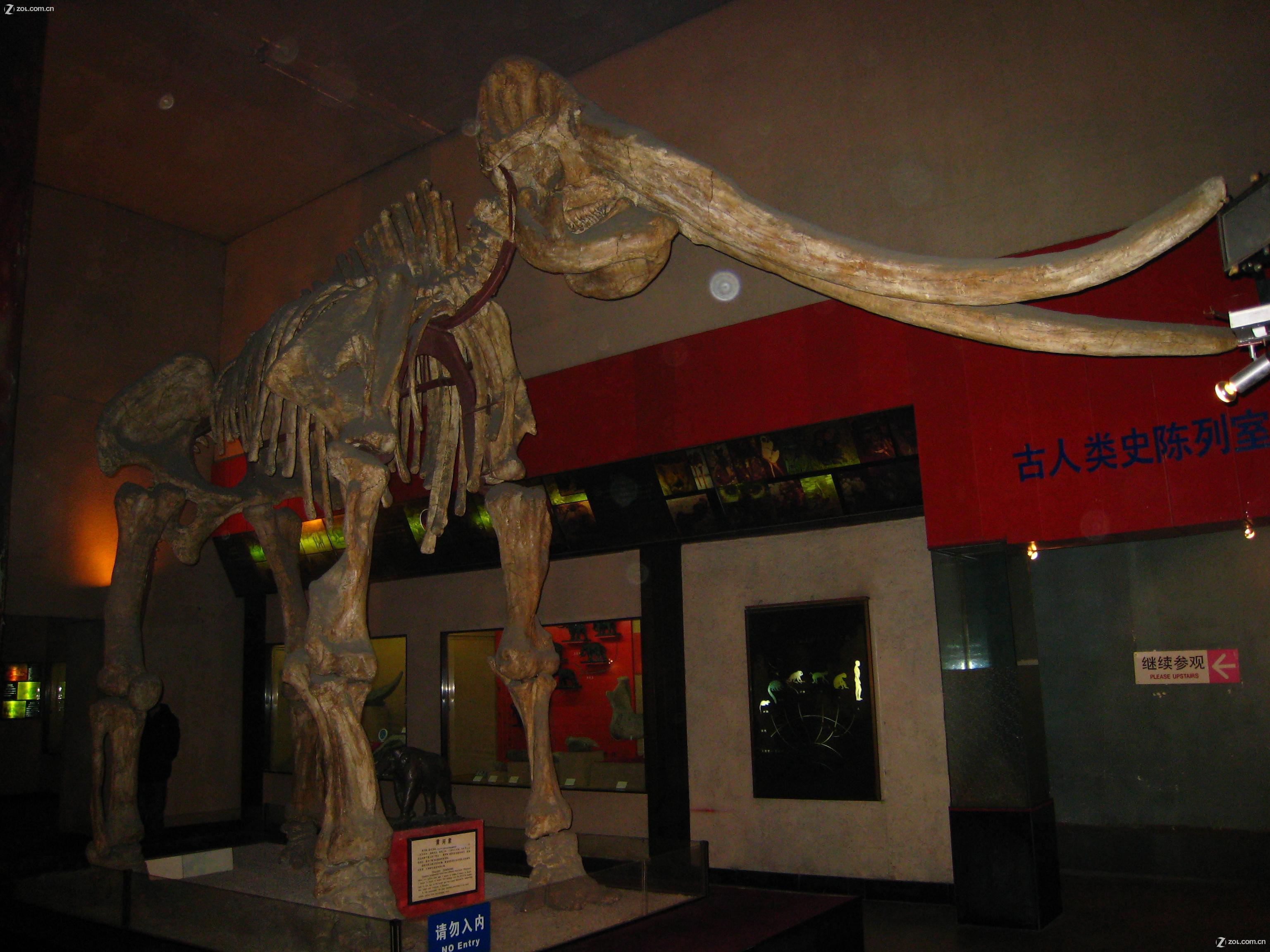 【上海自然博物馆】-动物植物论坛-zol中关村在线
