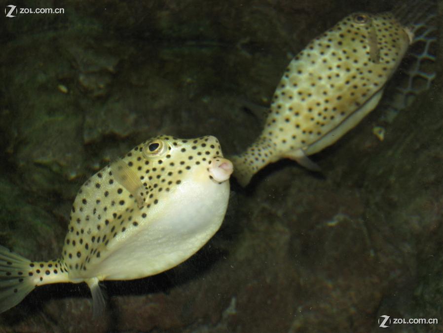 海底的蛇灭绝动物照片