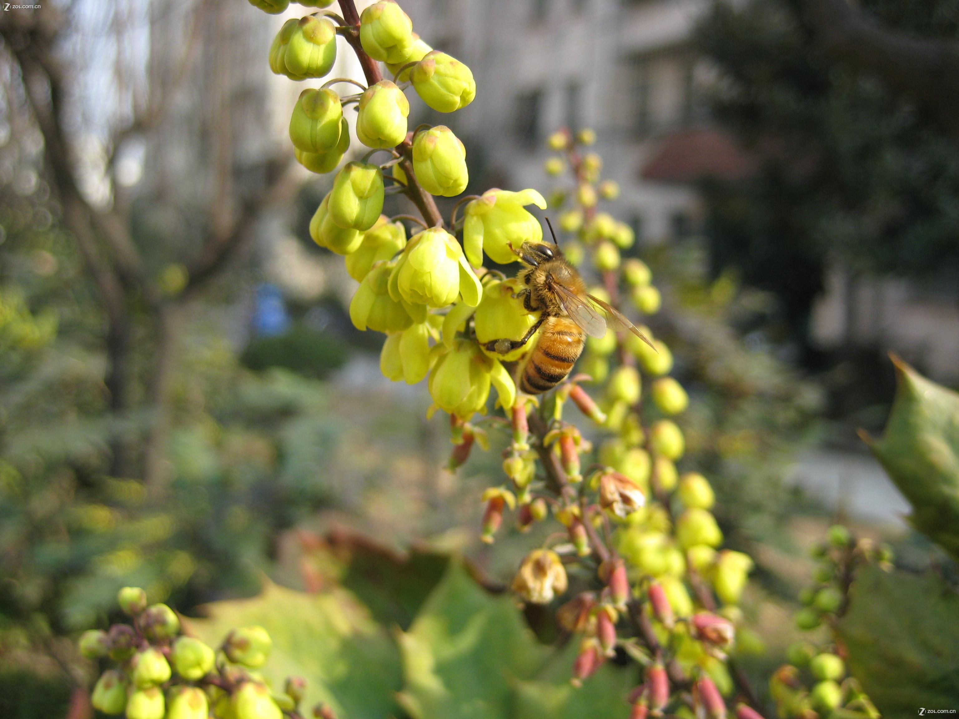 【春天采蜜的小蜜蜂2】佳能