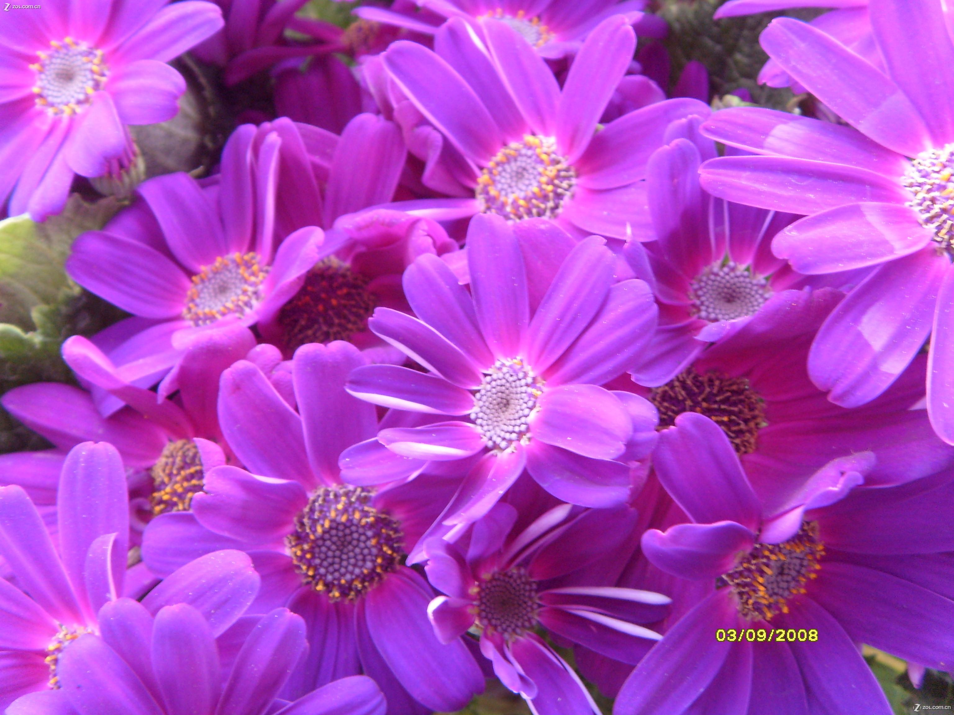 【春天采蜜的小蜜蜂】-动物植物论坛-zol中关村在线