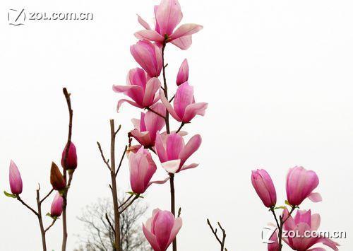 春天里的花儿