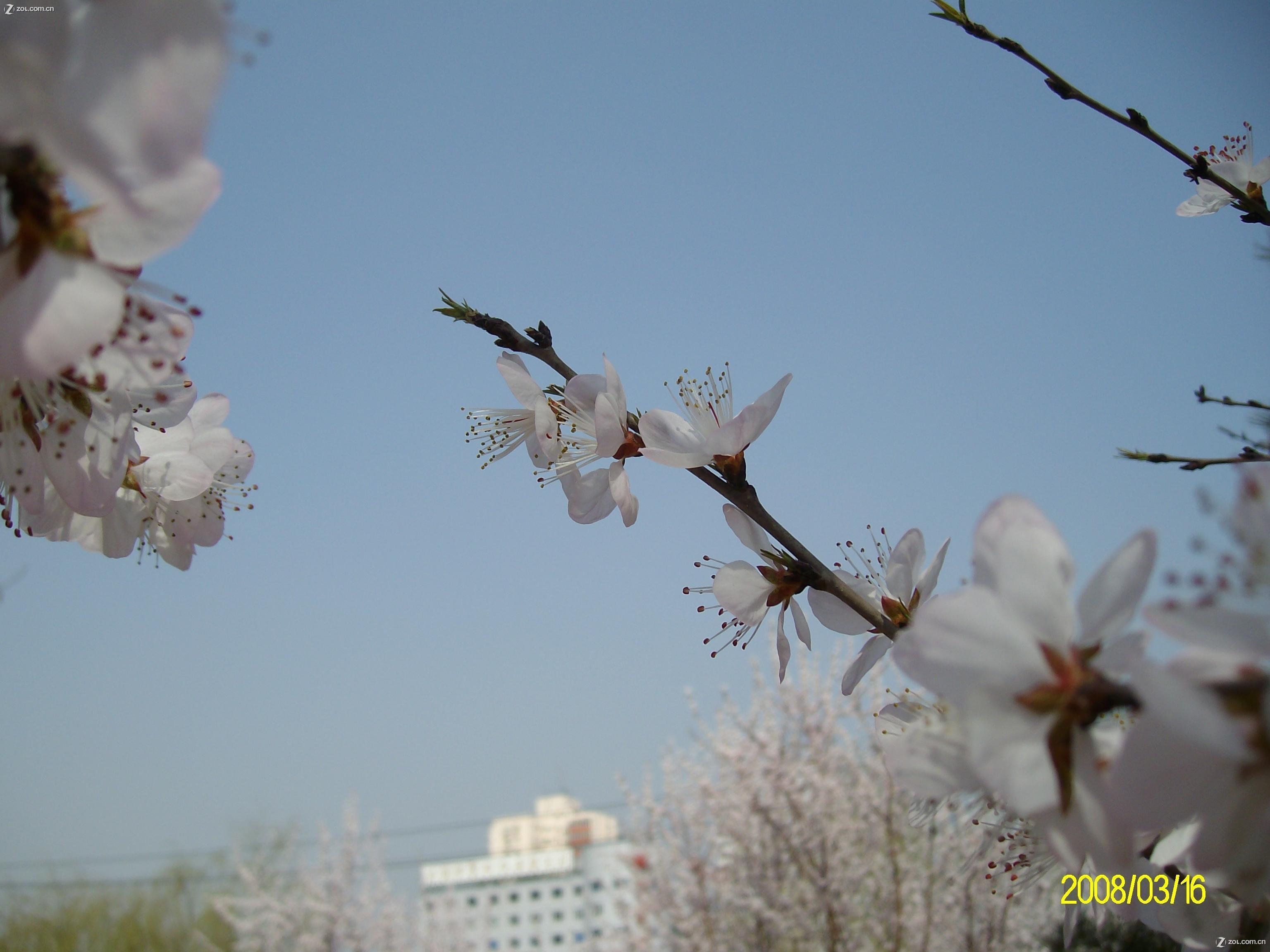 【春天来了---3月16日于元大都遗址公园】动物植物