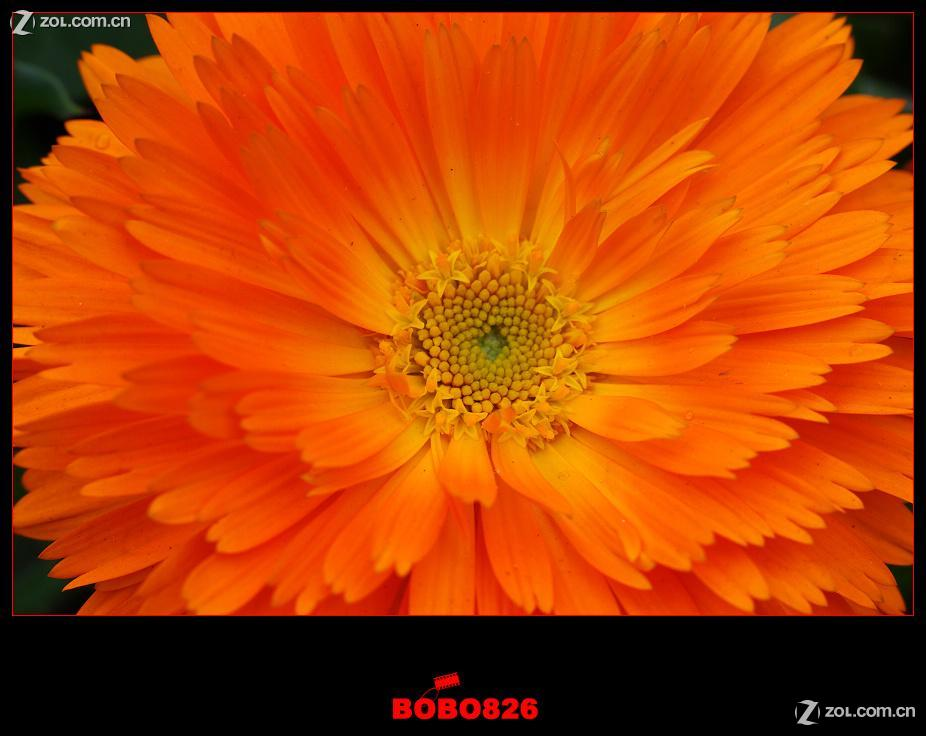 【花花世界(微距)】-动物植物-数码摄影论坛-zol