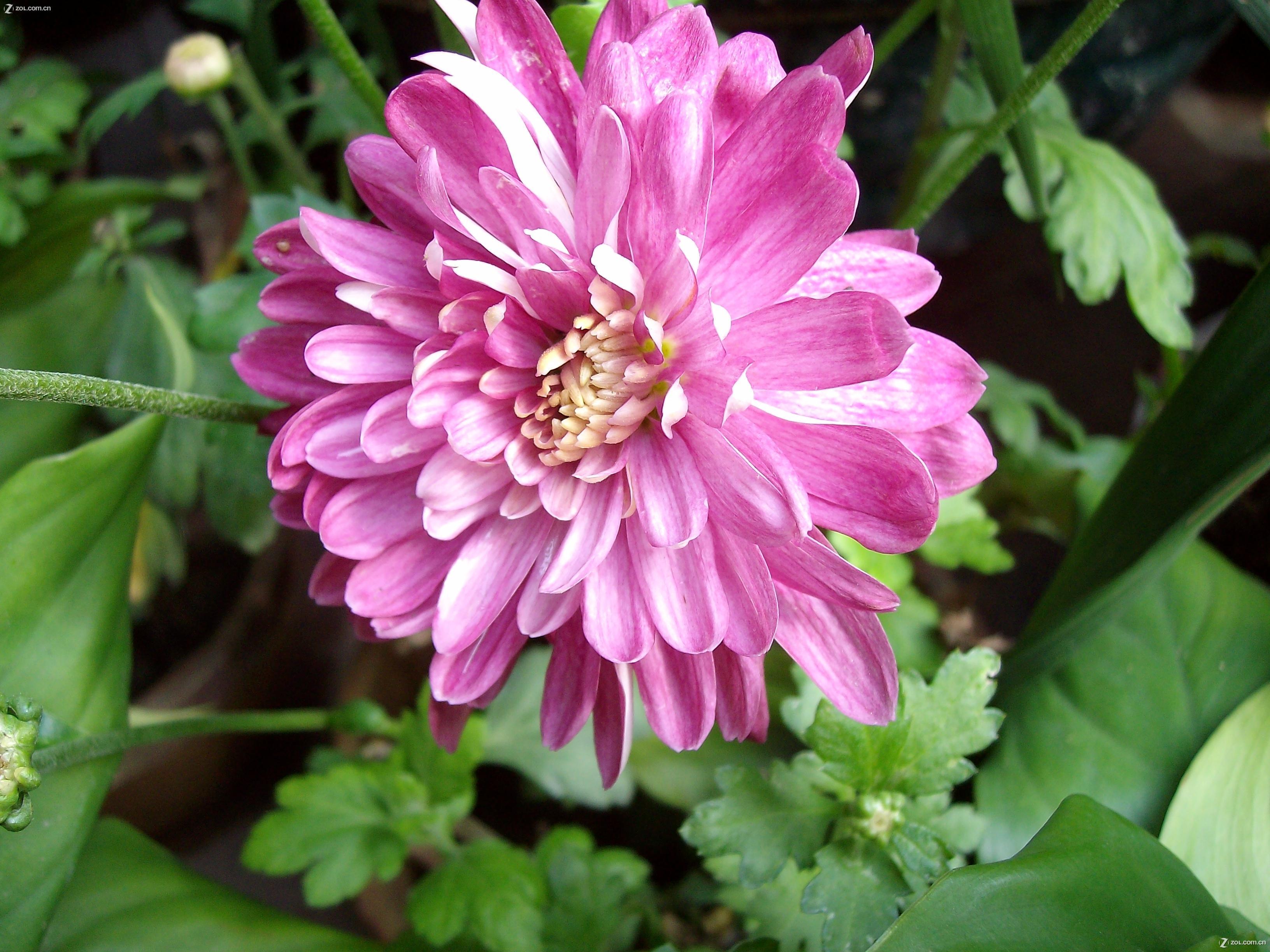 几种春天开的花