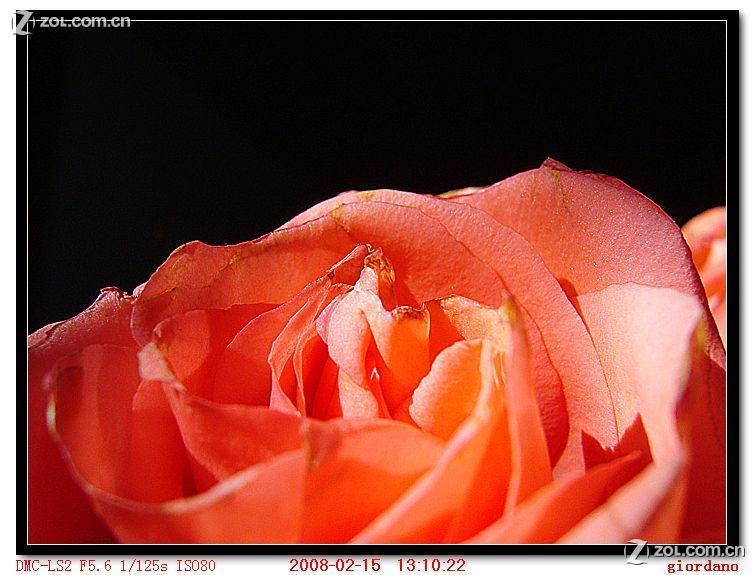 玫瑰花铅笔画法
