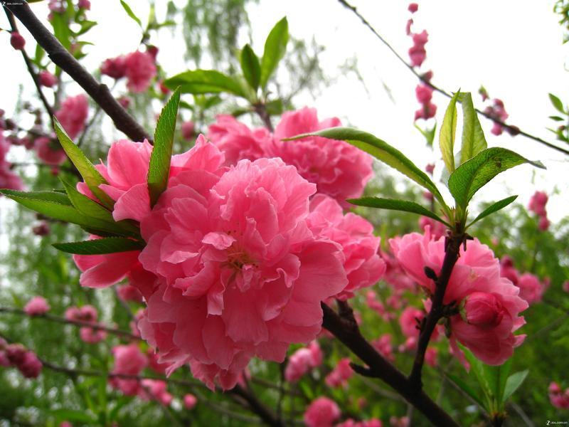 【春天花又开】-动物植物论坛-zol中关村在线