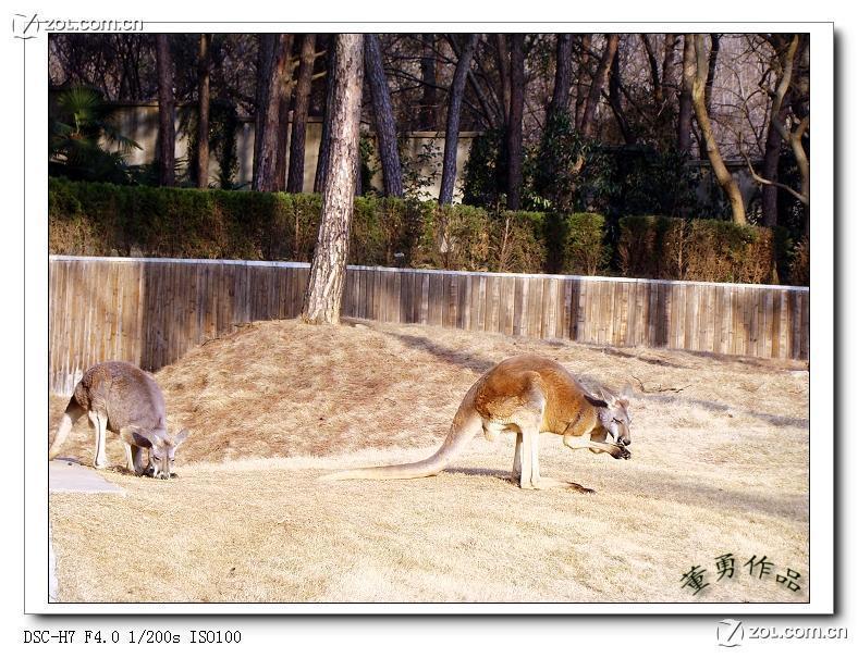 【合肥---蜀山野生动物园】-动物植物论坛-zol中关村