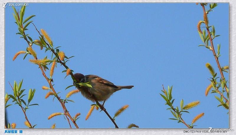 鸟语花香第二季之鸟与蝶