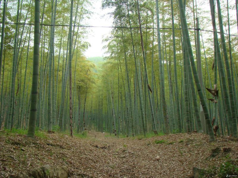 杭州东明山森林公园