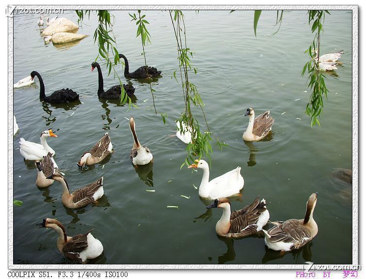 【野生动物园拍的禽类】-动物植物论坛-zol中关村