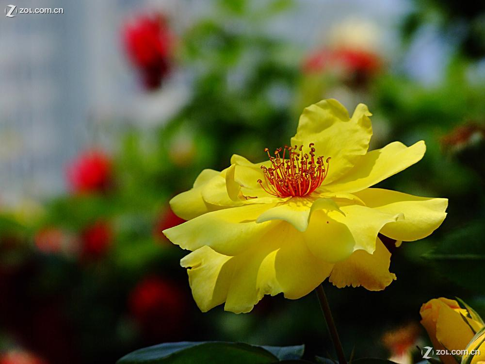 五月的鲜花分享展示