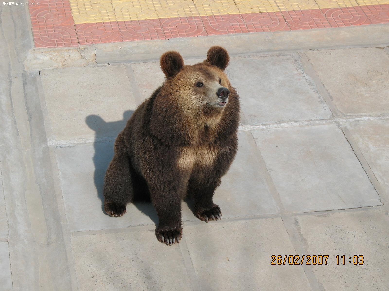 【威海西霞口野生动物园动物】-论坛-zol中关村在线