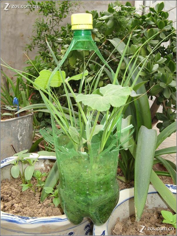 幼儿园塑料瓶吊饰_雪碧瓶做的盆景-优酷图库