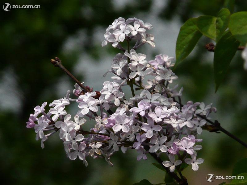 紫白串珠果盘制作图解