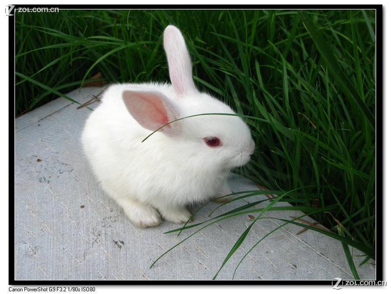 小白兔白又白,两只耳朵竖起来