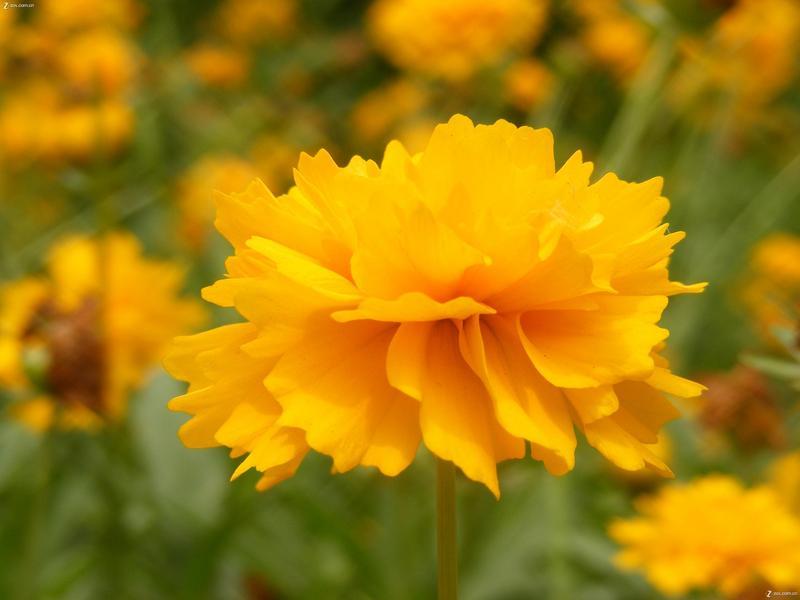 摄影论坛 摄影作品论坛 自然风景论坛 我也拍了几朵花,小景深.
