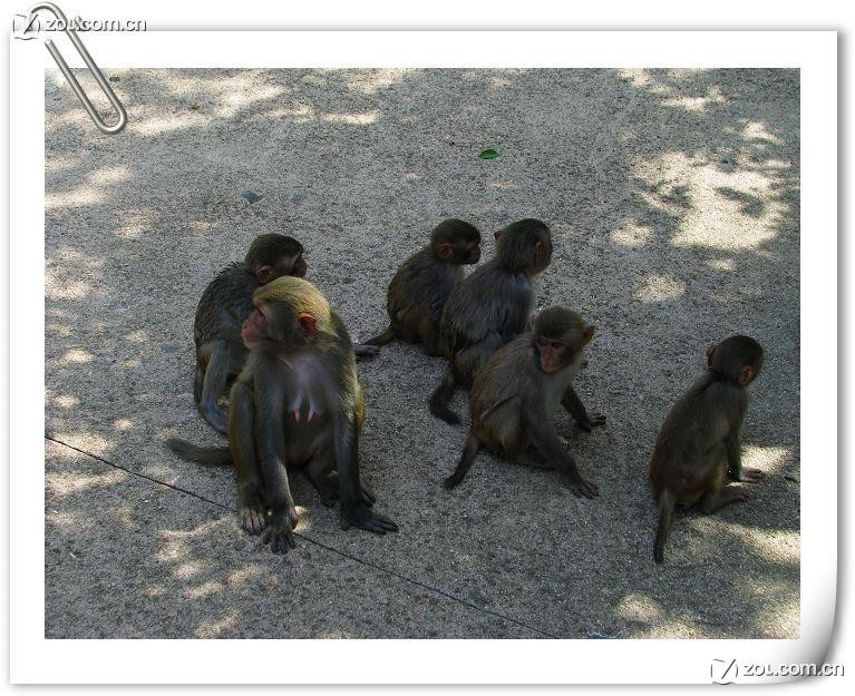 南湾猴岛的猴子们!