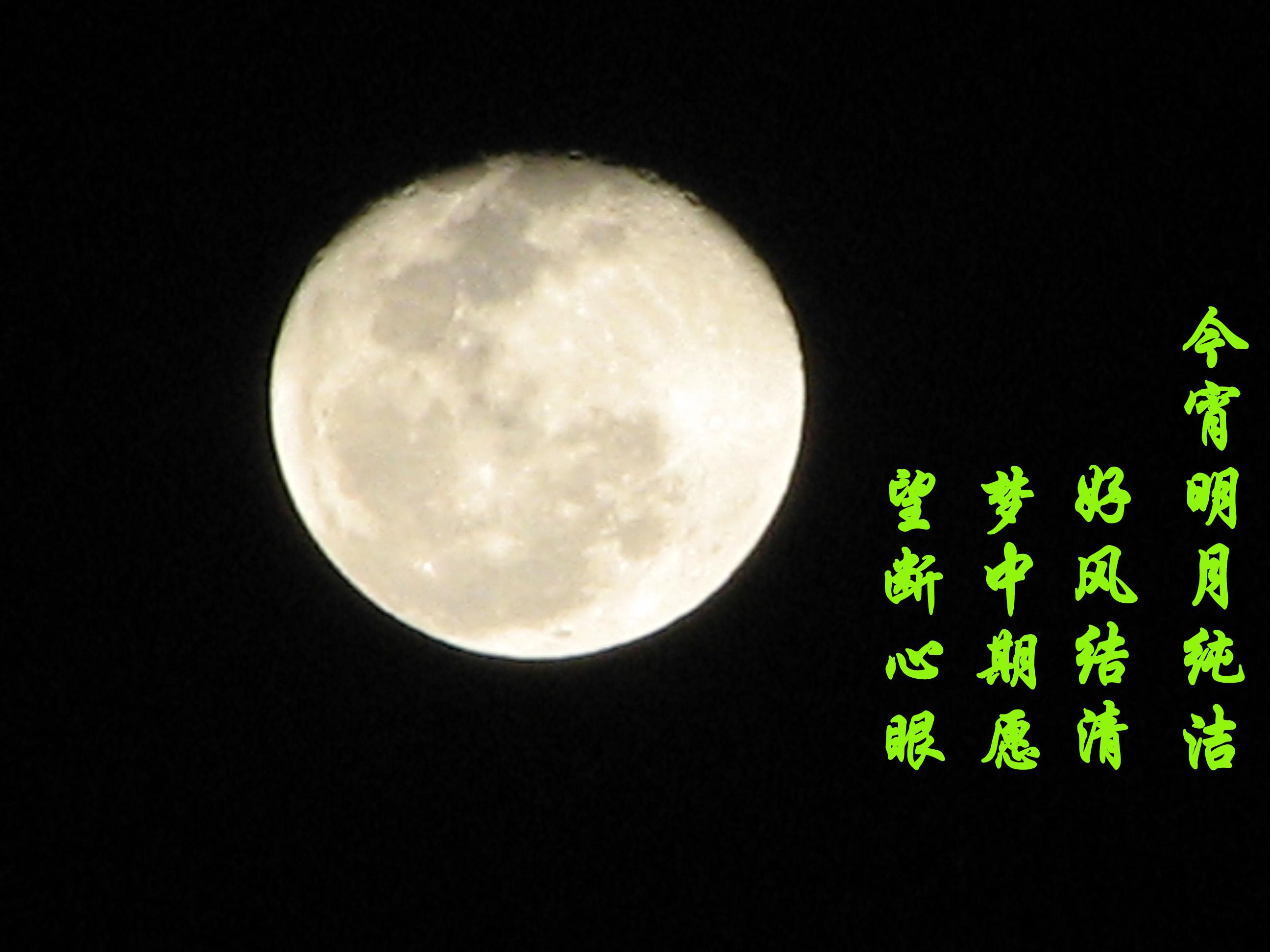 桌面背景森林月亮
