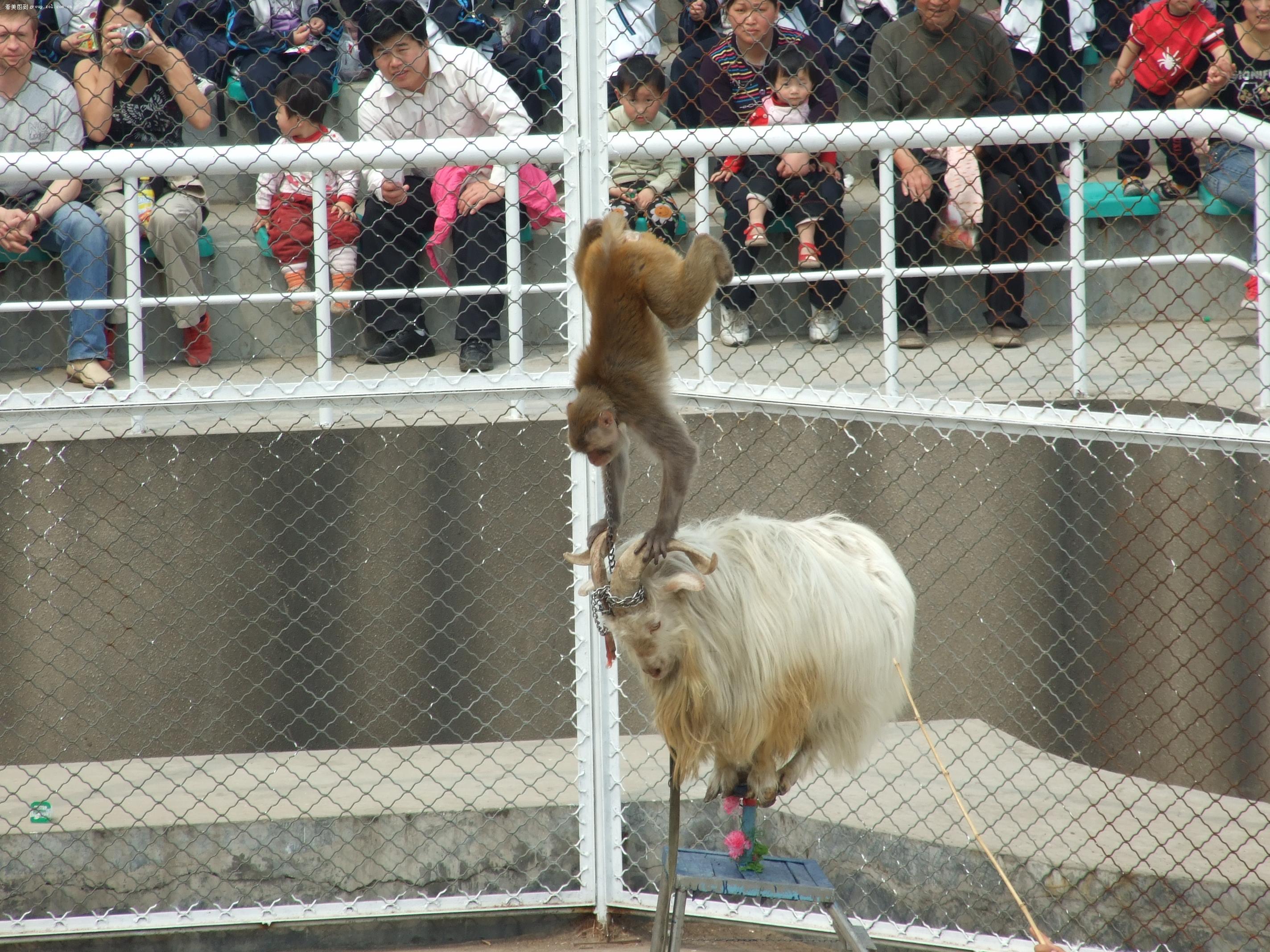 【北京野生动物园】富士